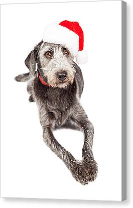 Christmas Santa Terrier Dog Laying Canvas Print by Susan Schmitz