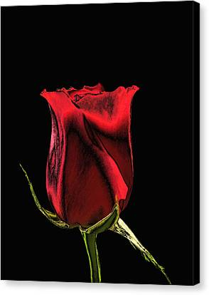 Chromatic Rosebud Canvas Print by Kristin Elmquist