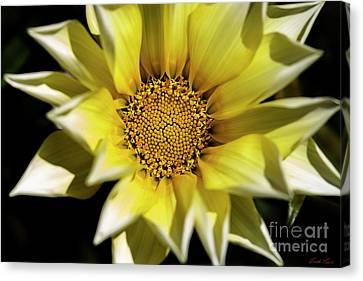 Canvas Print featuring the photograph Chrysanthos by Linda Lees
