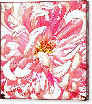 Chrysanthemum In Pink Canvas Print by Shadia Derbyshire