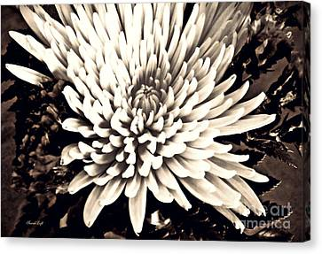 Canvas Print featuring the photograph Chrysanthemum In Sepia 2  by Sarah Loft