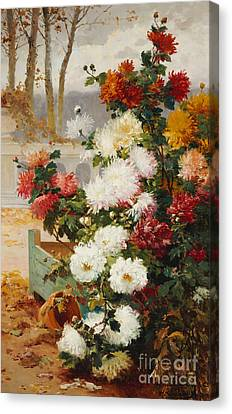 Chrysanthemums In A Walled Garden Canvas Print