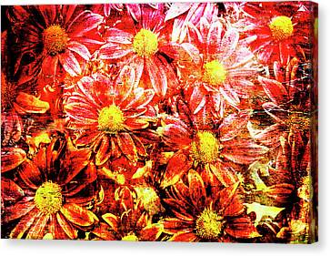 Chrysanthemums In Water 2 Canvas Print by Skip Nall