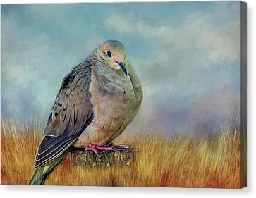 Chubby Dove Canvas Print