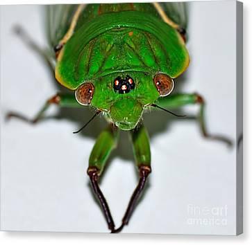 Cicada Eyes Canvas Print by Kaye Menner