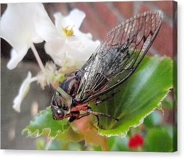 Canvas Print featuring the photograph Cicada On Flower by Beth Akerman