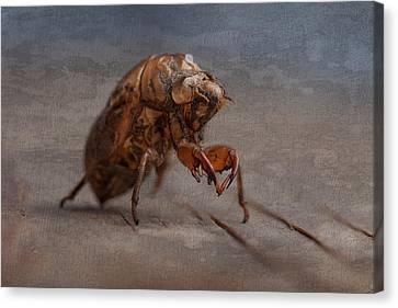 Cicada Shell Canvas Print by Tom Mc Nemar