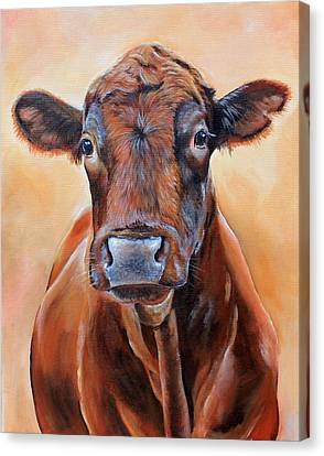 Angus Steer Canvas Print - Cinnabar    by Laura Carey