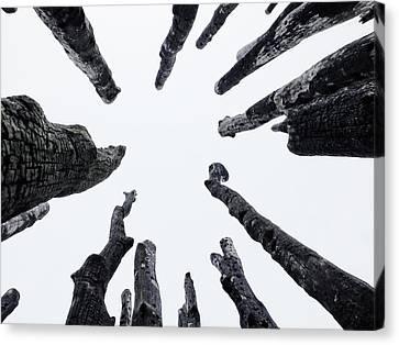 Circle Of Trees Canvas Print