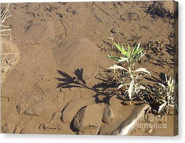 Canvas Print featuring the photograph Circle Shadow Plant by Marie Neder
