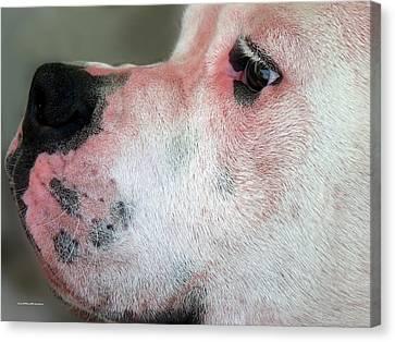 Buy Dog Art Canvas Print - Citizen Rana by Miss Pet Sitter