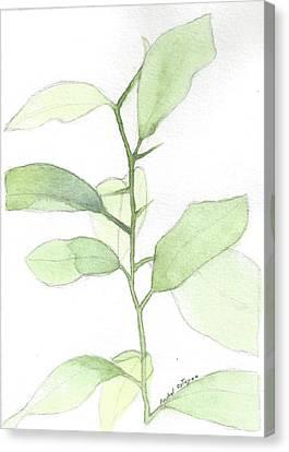 Citrus Sapling Canvas Print