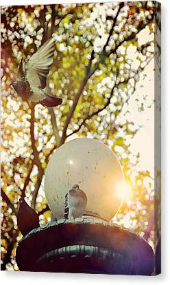 City Doves Canvas Print by JAMART Photography