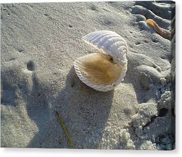 Clam Quarters Canvas Print