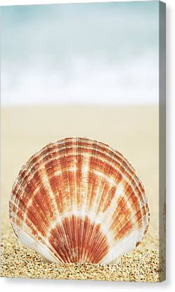 Clam Shell Canvas Print by Brandon Tabiolo - Printscapes