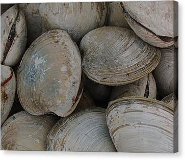 Clam Shells Canvas Print by Juergen Roth