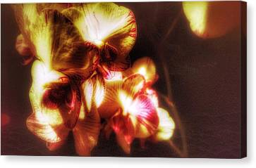 Canvas Print featuring the photograph Clarissa by Isabella F Abbie Shores FRSA