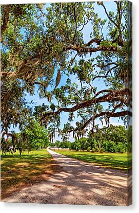 Overhang Canvas Print - Classic Southern Beauty - Evergreen Plantation by Steve Harrington