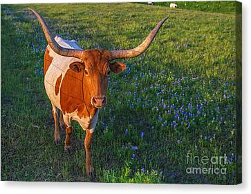Classic Spring Scene In Texas Canvas Print