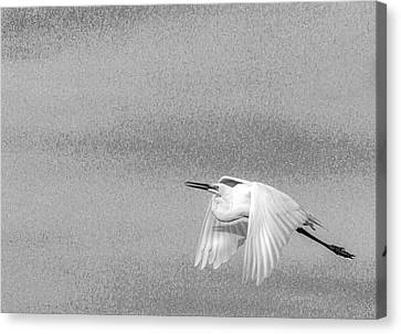 Clear For Take Off Canvas Print by Marvin Spates