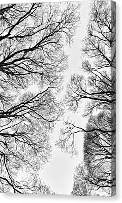Clearings Canvas Print by Matti Ollikainen