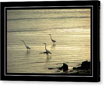 Clearwater Beach Canvas Print by Carolyn Marshall