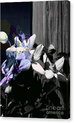 Clematis 2 Shades Of Grey Canvas Print by Elaine Hunter