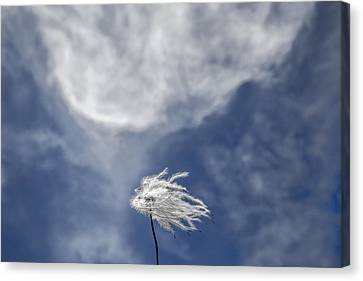 Clematis And Clouds Canvas Print
