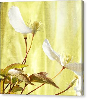 Clematis And Sunshine Canvas Print by Cindy Garber Iverson