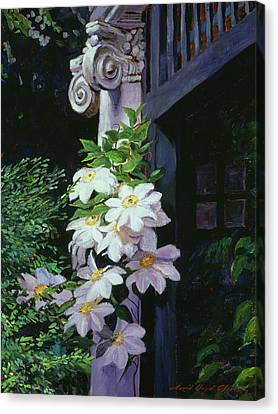 Clematis Blossoms Canvas Print by David Lloyd Glover