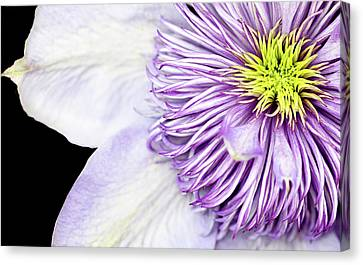 Canvas Print featuring the photograph Clematis Center by Rebecca Cozart