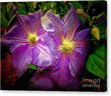 Clematis Azure Pearl Canvas Print