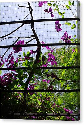 Canvas Print - Clematis I by Anna Villarreal Garbis