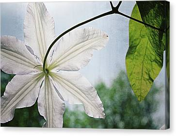 Canvas Print featuring the photograph Clematis Vine And Leaves by Michelle Calkins