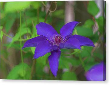 Flowerrs Canvas Print - Clematis by Jeff Oates Photography