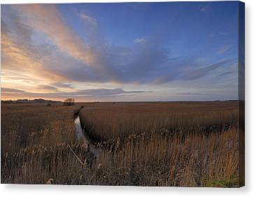 Cley Marshes  Canvas Print by Liz Pinchen