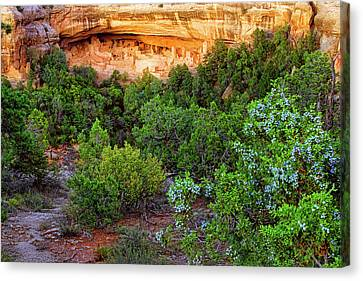 Canvas Print featuring the photograph Cliff Palace At Mesa Verde National Park - Colorado by Jason Politte