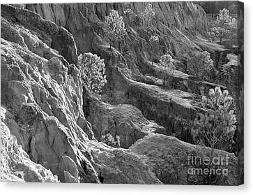 Cliff Pine Trees In Monochrome Canvas Print