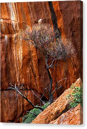Clinging To Life Canvas Print by Mike  Dawson