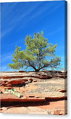 Clinging Tree In Zion National Park Canvas Print by Bruce Gourley