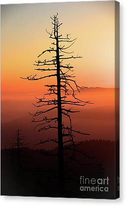 Canvas Print featuring the photograph Clingman's Dome Sunrise by Douglas Stucky