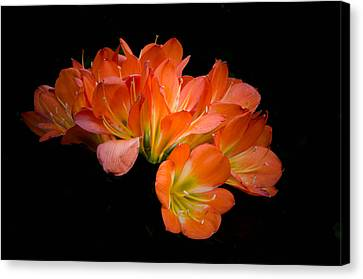 Clivia Flora Canvas Print by Bruce Pritchett