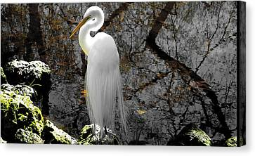 Cloaked Canvas Print by Judy Wanamaker