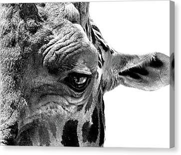 Canvas Print featuring the photograph Close Encounter by Marion Cullen
