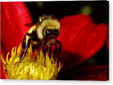 Close Up Bee Canvas Print