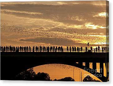 Close Up Congress Avenue Bat Bridge As 1.5 Million Bats Take Flight During Spectacular Golden Sunset Canvas Print by Herronstock Prints