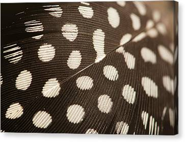 Close Up Feather Canvas Print
