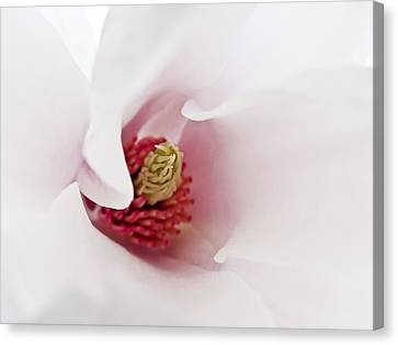 Abstract White Red Pink Flowers Macro Photography Art  Canvas Print by Artecco Fine Art Photography