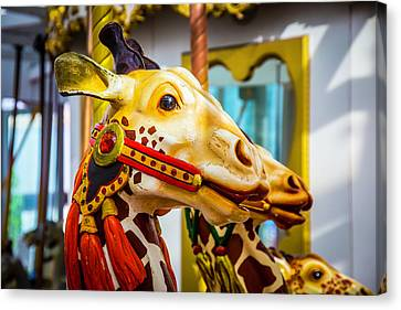 Close Up Giraffe Ride Canvas Print by Garry Gay