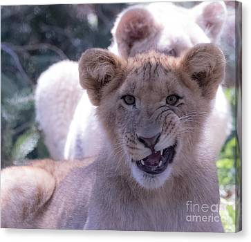 Close Up Of A Lion Cub Canvas Print by CJ Park